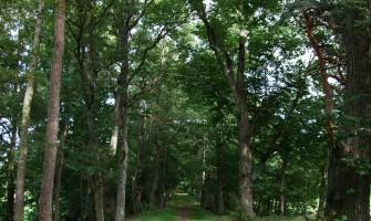 Chemin de la Marquise, Sur la route des Maubourg
