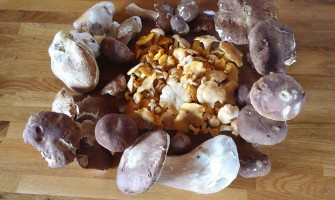 Cueillette de champignons, Saint-Maurice de Lignon